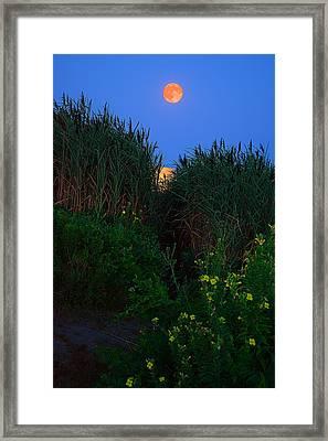 Supermoon 2014 -color Framed Print by Lourry Legarde