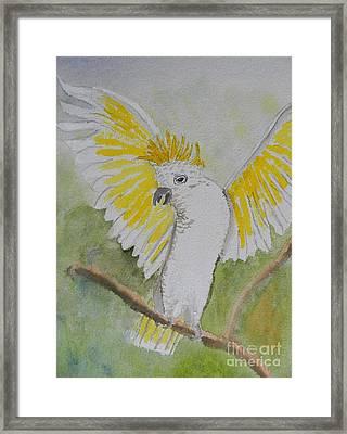 Suphar Crested Cockatoo Framed Print by Pamela  Meredith
