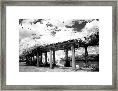 Surreal Augusta Georgia Black And White Infrared  - Riverwalk River Front Park Garden   Framed Print by Kathy Fornal