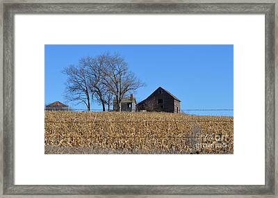 Surrounded By Corn Framed Print by Renie Rutten