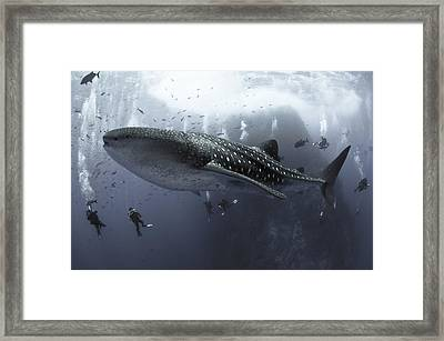 Surrounded Framed Print by David Valencia