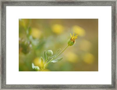 Surrounded Framed Print by Guido Montanes Castillo
