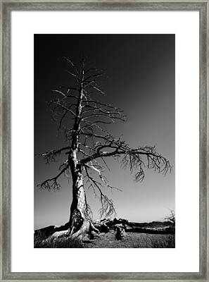 Survival Tree Framed Print by Chad Dutson