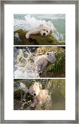 Surviving Life's Waves Framed Print by William Patrick