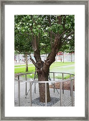 Survivor Tree Framed Print by Jim West