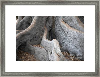 Survivor2 Framed Print by Amanda Barcon