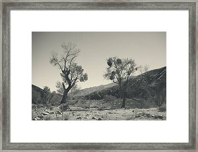 Suvival Can Be Tough Framed Print by Laurie Search