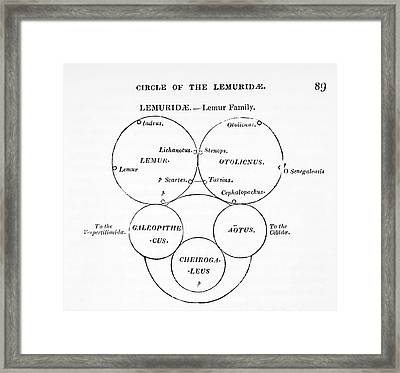 Swainson's Quinary Taxonomy Framed Print by Paul D Stewart