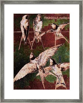 French Swallows  Framed Print by Bellesouth Studio