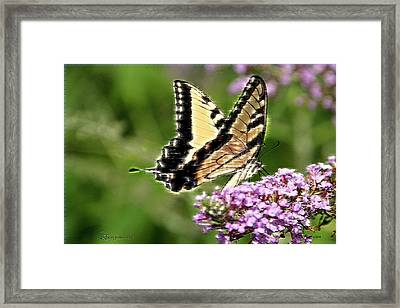 Swallowtail 267 Framed Print by EricaMaxine  Price