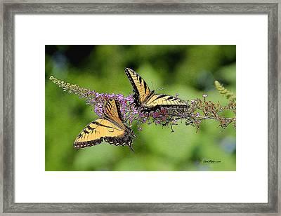 Swallowtail Butterflies 276 Framed Print by EricaMaxine  Price