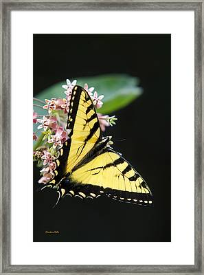 Swallowtail Butterfly And Milkweed Flowers Framed Print by Christina Rollo
