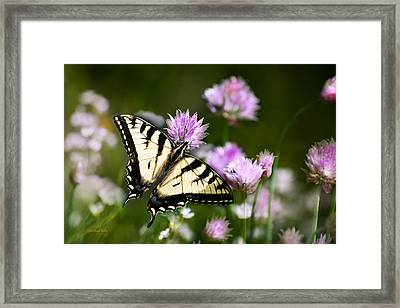 Swallowtail Butterfly Dream Framed Print by Christina Rollo