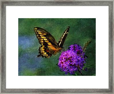 Swallowtail Landing Framed Print by Renee Skiba
