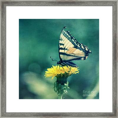 Swallowtail Framed Print by Priska Wettstein