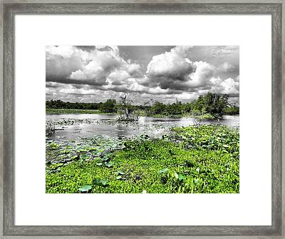 Swamp Framed Print by Dan Sproul