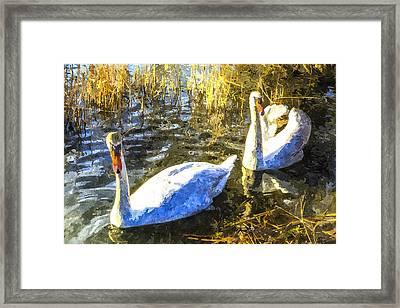 Swan Art Framed Print by David Pyatt
