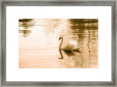 Swan Framed Print by Charline Xia