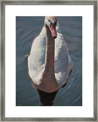 Swan Framed Print by Christopher Reid