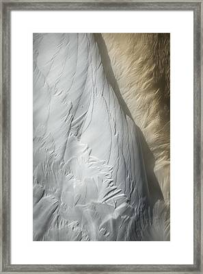 Swan Detail Framed Print by Andy Astbury