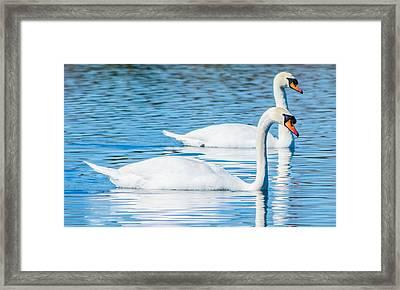 Swan Dreams Framed Print by Parker Cunningham
