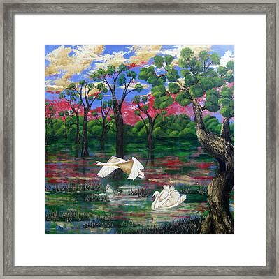Swan Heaven Framed Print by Susan McLean Gray