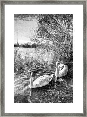 Swan Lake Art Framed Print by David Pyatt