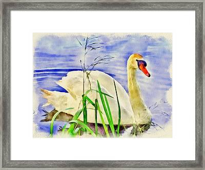 Swan Lake Framed Print by Yury Malkov