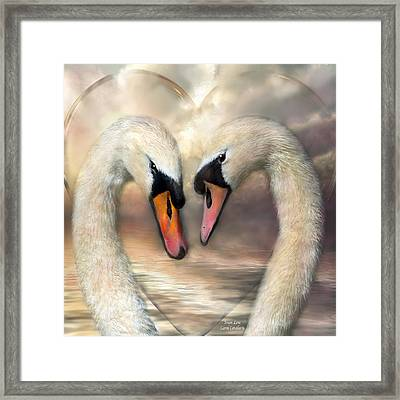 Swan Love Framed Print by Carol Cavalaris