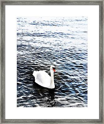 Swan Framed Print by Mark Rogan