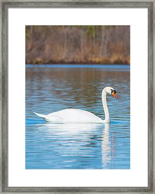 Swan On A Lake Framed Print by Parker Cunningham