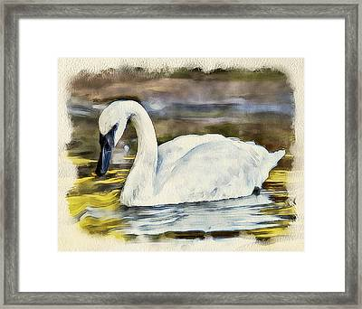 Swan On The Lake Framed Print by Yury Malkov