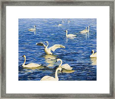 Swans In Late Afternoon Framed Print by Mary Ann King