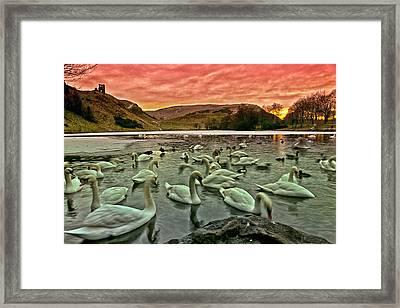 Swans In The Loch Framed Print by Jean-Noel Nicolas