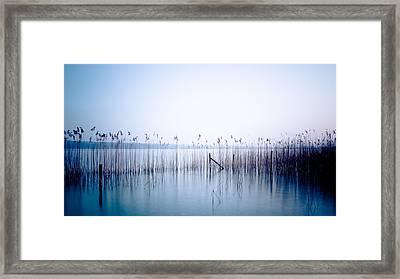 Sway Framed Print by Alexander Kunz