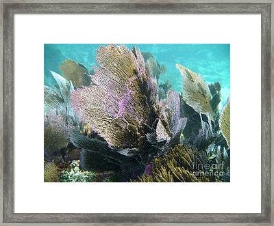 Swaying In The Current Framed Print by Adam Jewell