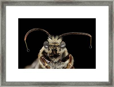 Sweat Bee Framed Print by Us Geological Survey