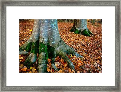 Swedish Beech Forest Framed Print by Inge Johnsson