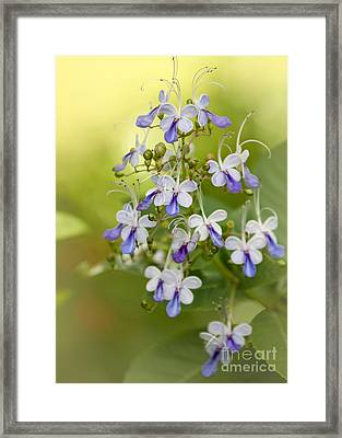 Sweet Butterfly Flowers Framed Print by Sabrina L Ryan