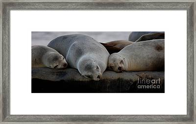 Sweet Dreams Seals Framed Print by Ruth Jolly