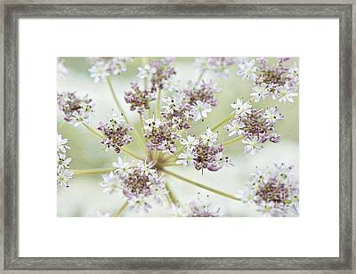 Sweet Lace Framed Print by Jacky Parker