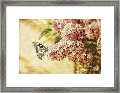 Sweet Lilacs Framed Print by Lois Bryan