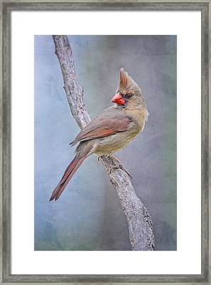 Sweet Little Lady Redbird Framed Print by Bonnie Barry