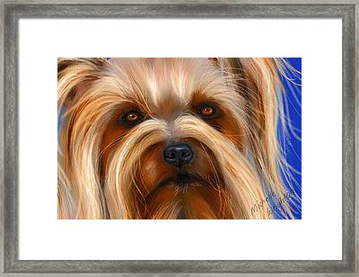 Sweet Silky Terrier Portrait Framed Print by Michelle Wrighton