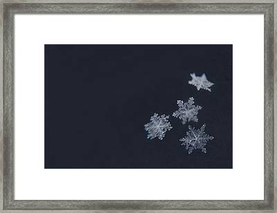 Sweet Snowflakes Framed Print by Carrie Ann Grippo-Pike