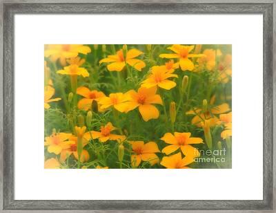 Sweet Summer Marigolds Framed Print by Cathy  Beharriell