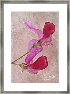Sweet Textures 2 Framed Print by John Edwards