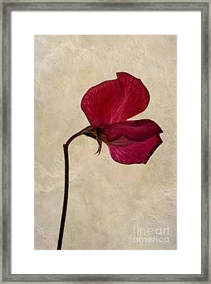 Sweet Textures Framed Print by John Edwards