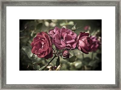 Sweetly Pink Framed Print by Christi Kraft