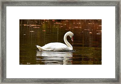 Swim And Grace Framed Print by Lourry Legarde